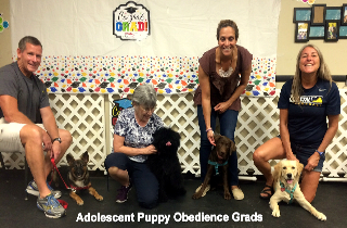 Group Dog Training | Playful Pups & Performance Training, Inc. | Virginia Beach, VA | (757) 469-6282